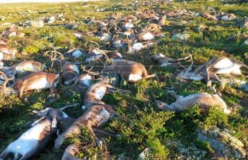 Молниезащита животноводческих предприятий